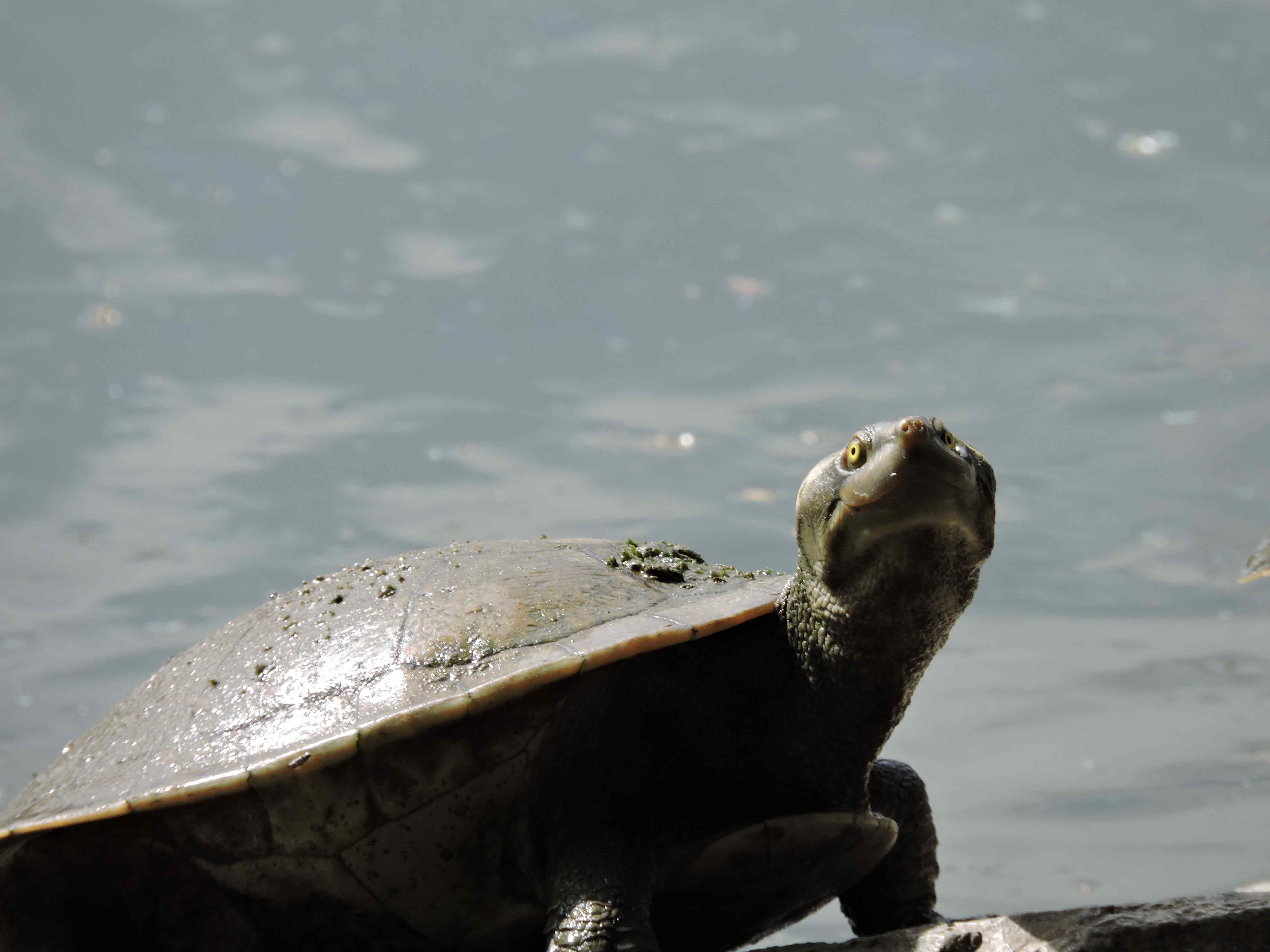 turtle-days-web
