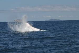 A whale tail hitting the water.